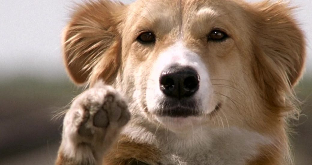 filme bingo esperto cachorro